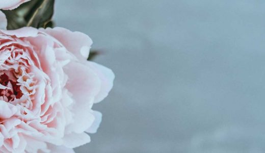 日比谷花壇の2015「敬老の日」お花のギフト