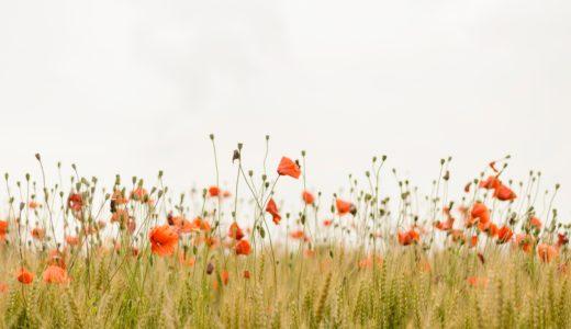 花キューピット一月の誕生日の花『スイートピー』